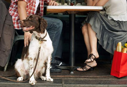 Dog Walking St. Petersburg Top Dog Friendly Restaurants