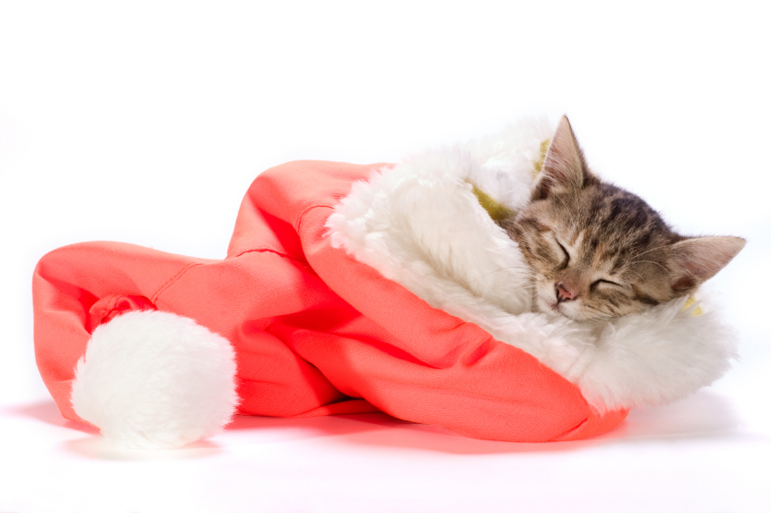St Pete Pet Sitting Holiday Pet Safety Tips