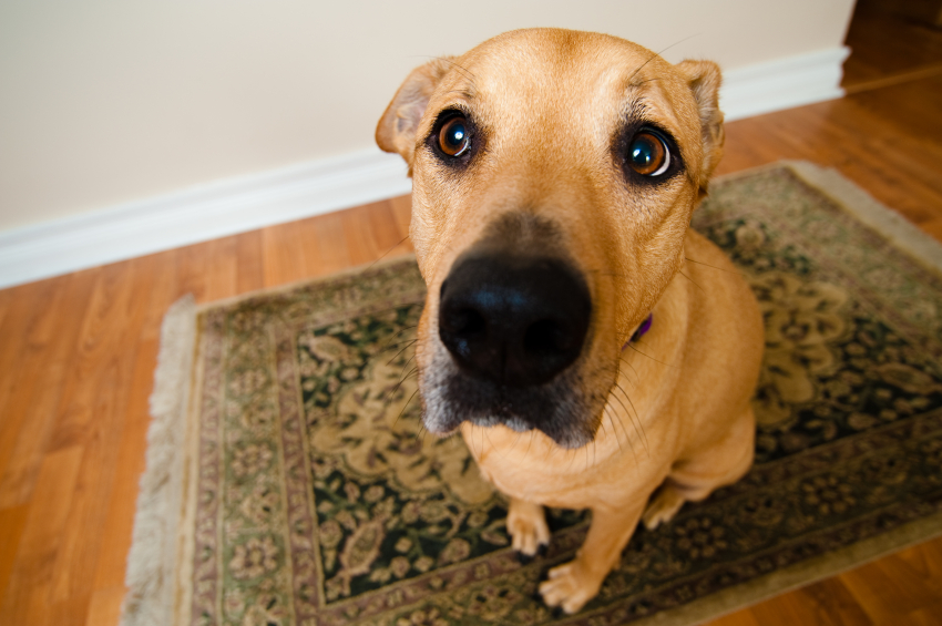St. Pete Pet Sitting Tips to Eliminate Begging