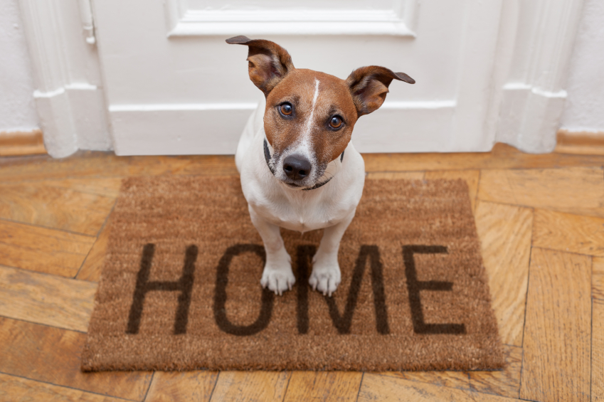 St. Pete Pet Sitting Tips for When You Work Long Hours- Should I use a IN-HOME Doggie Day Care?