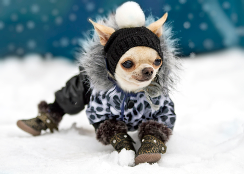 St. Pete Pet Sitting Cold Weather Tips